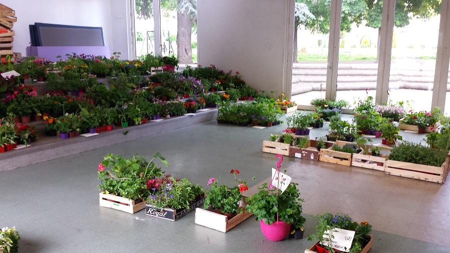 vente de plants de l gumes et de fleurs institution sainte therese les cordeliers. Black Bedroom Furniture Sets. Home Design Ideas
